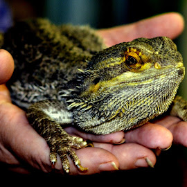 Lizard by Lorraine D.  Heaney - Animals Reptiles