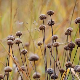 by Lori Kulik - Nature Up Close Other plants ( plant, autumn, nature up close )