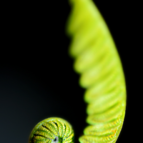 by Keple MN - Nature Up Close Leaves & Grasses ( fern, nature, green, plants, leaves )