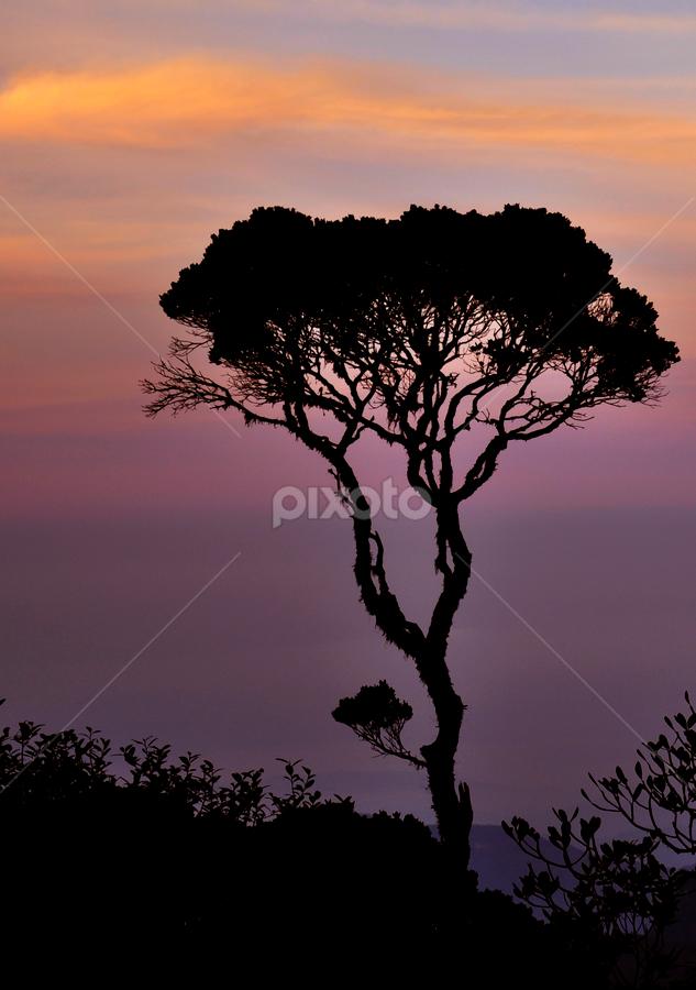 Alone by Shashi Amarasinghe - Nature Up Close Trees & Bushes