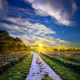 Miles on my Heart by Phil Koch - Landscapes Prairies, Meadows & Fields ( vertical, photograph, frost, fine art, yellow, travel, leaves, love, sky, nature, autumn, flowers, light, flower, orange, agriculture, horizon, portrait, rural, country, environment, dawn, serene, outdoors, trees, floral, natural light, wisconsin, ray, road, landscape, phil koch, sun, photography, flying, blue sky, path, horizons, office, clouds, park, green, dirt road, back light, scenic, morning, shadows, field, red, color, sunset, peace, fall, meadow, landscapephotography, beam, earth, sunrise, geese, landscapes, hike, mist )