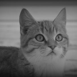 by Tara Hodge - Animals - Cats Kittens