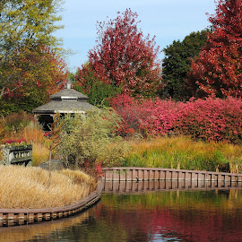 Fall Colors by Barbara Langfeld - Nature Up Close Gardens & Produce ( nature, waterscape, gardens, landscape, close-up,  )