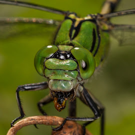 by Jari Johnsson - Animals Insects & Spiders