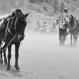 Feel alone by Angga Hardani - Animals Horses (  )