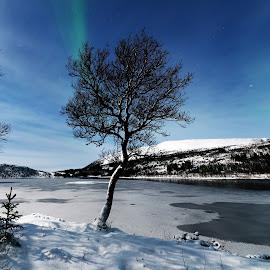 Tree and aurora in moonlight by Marius Birkeland - Nature Up Close Trees & Bushes ( tree, snow, aurora borealis, aurora, lake )