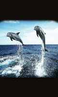 Screenshot of Dolphin Racing live wallpaper