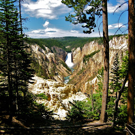 Artist Falls in Yellowstone National Park, U.S.A. by Tyrell Heaton - Landscapes Forests ( yellowstone national park, waterfall, forest )