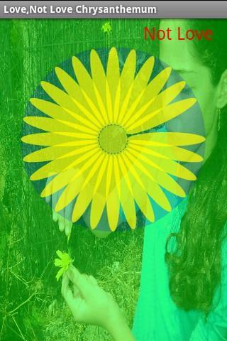 Love Chrysanthemum