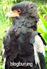 Gambar preview Sejarah Garuda Sebagai Lambang Indonesia