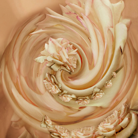 DELICATE by Carmen Velcic - Digital Art Abstract ( abstract, delicate, roses, pink, flowers, digital )