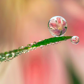 You'll be main by Citra Hernadi - Nature Up Close Natural Waterdrops