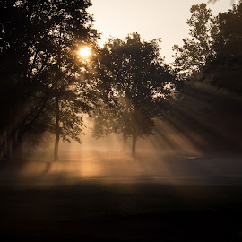Sunny mist by Dale Pausinga - Landscapes Sunsets & Sunrises ( sunrise, morning, mist )