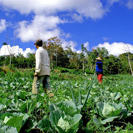 in the garden by Hartono Wijaya  - Landscapes Travel ( farmer, indonesia, enrekang )