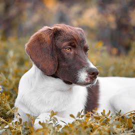 by Kesim Kesgin - Animals - Dogs Portraits