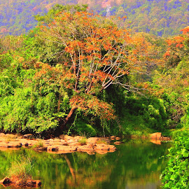 @thumpormizi,tourist place in kerala by Nijin Jacob - Landscapes Forests ( athirapili, nature, thumpormizi, beautiful, kerala )