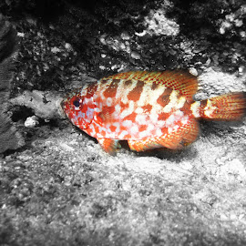 Cabos snorkeling by Tonja Wolfe-Throgmorton - Animals Fish