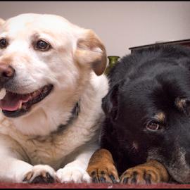 by Jay Rinehart - Animals - Dogs Portraits