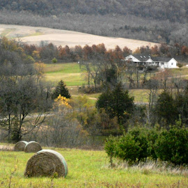 Hay Rolls in Illinois Field by Kathy Rose Willis - Landscapes Prairies, Meadows & Fields ( field, illinois, autumn, green, hay, trees )