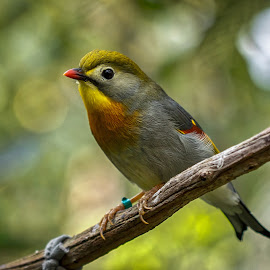 Little Bird by Carol Plummer - Animals Birds ( bird, zoo, nature, colorful, animal )