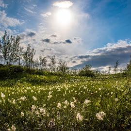 by Mikko Marttala - Landscapes Prairies, Meadows & Fields