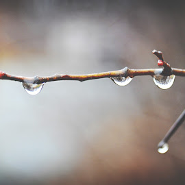 by Rachel Plowman - Digital Art Things ( water drops rain tree limbs spring )