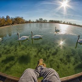 by Adam Horvath - City,  Street & Park  City Parks ( water, hungary, winter, europe, nature, january, swan, lake, sunshine, dock, sun )
