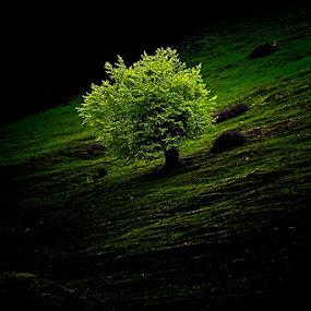 Copacul..© Costel Ciobanu by Costel Ciobanu - Nature Up Close Trees & Bushes
