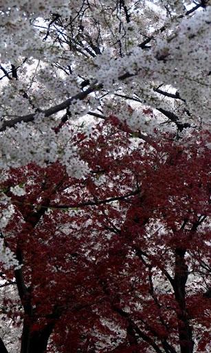 埼玉の壁紙|玩攝影App免費|玩APPs