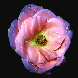 by JOEL Graphuchin - Flowers Single Flower