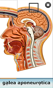 Anatomy Star - Head and Neck- screenshot thumbnail