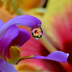 by Margie MacPherson - Nature Up Close Other Natural Objects ( macro, hibiscus, orchid, flowers, water drop, , purple, yellow, color )
