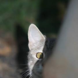 by Snow Losh - Animals - Cats Portraits