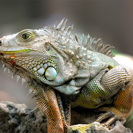 COLOR FULL by Gaz Makarov - Animals Reptiles