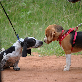 Friends by Devaiah Kr - Animals - Dogs Playing (  )