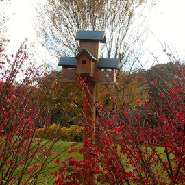 Bird House in the Fall by Kayla Coker - Novices Only Objects & Still Life