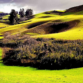 Green Field by Winkie Chau - Landscapes Prairies, Meadows & Fields ( grassland, meadow, scenic, landscape, new zealand )