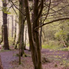 Hidden by Elen Maggs - Digital Art Places ( dreamy, mystical, nature, photographic art, art, trees, places, woods )
