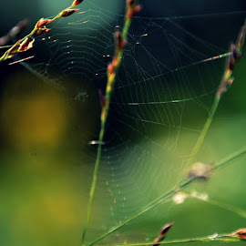 colorful web by Chandra Whitfield - Nature Up Close Webs ( nature, spider, web, insect, photography )
