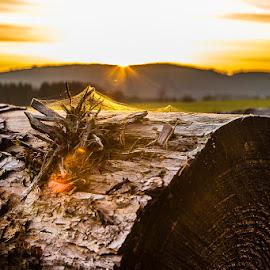 by Ralf Harimau Weinand - Nature Up Close Trees & Bushes ( gangolf, deutschland, felder, cobwe, mettlach, 2014, spinnennetz, saarland, sonnenuntergang, cobweb, sunset, germany, saarschleife, fields )