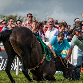 A horse suffers an injury after a race  by Gerald Horgan - Animals Horses ( ireland, dingle peninsula, dingle, photojournalism, racing, horse, races, photography )