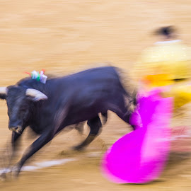 Ole! by Mike O'Connor - Sports & Fitness Other Sports ( toro, unfair, bleeding, fallas festival, bull fighting, valencia, blood, matador, bull, killing, spain,  )