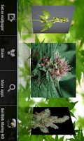 Screenshot of Hemp HD Wallpapers