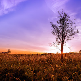 Lonely tree by Ricardo  Guimaraes - Nature Up Close Trees & Bushes ( tree, nature, colorful, sunset, meadow, quiet, portugal, landscapes, large,  )