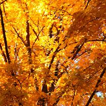 Fall Into Phenology