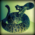 Rattlesnake Sound Effects icon