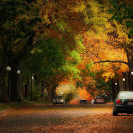Fall Neighborhood by Tricia Scott - City,  Street & Park  Neighborhoods ( autumn, cars, foliage, street, fall, neighborhood, leaves )