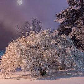 by Bruce Cramer - Landscapes Weather (  )