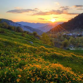 Yellow sunset by Olsi Belishta - Landscapes Sunsets & Sunrises ( hdr, sunset, yellow, flowers, albania )