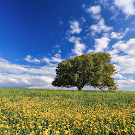 Ramot Menashe by Bar Artzi - Landscapes Prairies, Meadows & Fields ( clouds, tree, nature, israel, landscape, flowers )